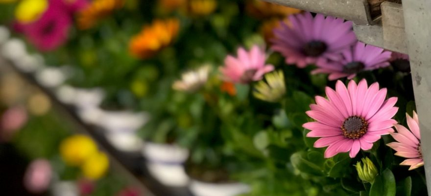 FRESH FLOWERS AND PLANTS BUTON